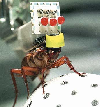 Таракан обрабатывается углекислым газом, после чего.